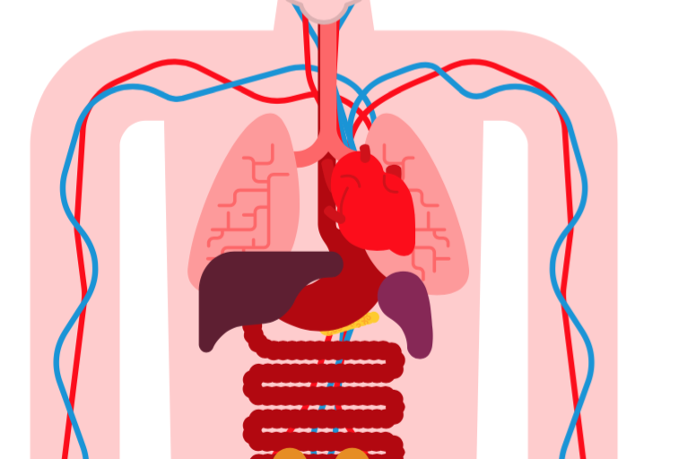 [Free Guide] Primary 5 Science Circulatory System Concept